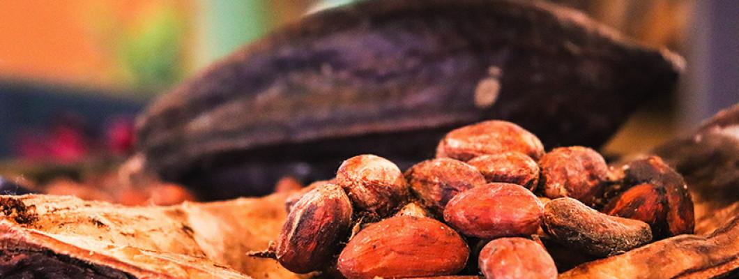 Тайната на какаовите зърна